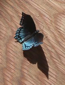 Butterflies & Tea 2015